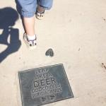 Jones Point Park Deer Tracks