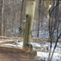 Observe birds feeding at Potomac Overlook Nature Center in Arlington VA