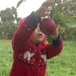 Messy apple picker Stribling Orchard Joy Troupe NOVA