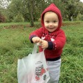 little apple picker at stribling orchard Photo Credit Dana Sasser