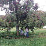 picking apples Stribling Apple Orchard Joy Troupe NOVA photo credit Dana Sasser