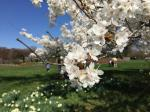 National Arboretum offers all the beauty with fewer crowds